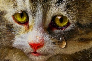 cat_crying1