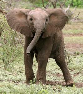 elephant_rctb-8681_blog
