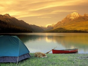 nature-camping-wallpaper