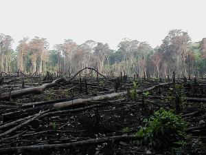 deforestation-rainforest-burned-down
