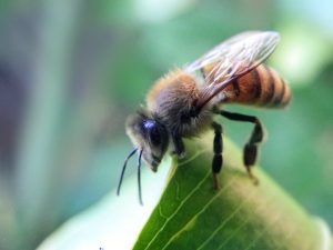bee_stock_01_by_shutter_shooter-d4nc6us