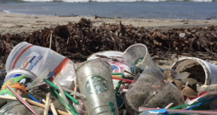 Straws: A Serious Source of Pollution