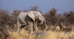 Mysterious Elephant Deaths in Botswana