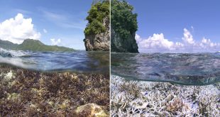 Corals in Danger of Rising Sea Temperatures