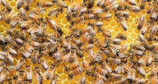 Pesticides are Still Killing Bees